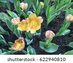flower bloom | Shutterstock . vector #622940810