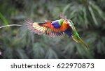 rainbow lorikeet in flight ... | Shutterstock . vector #622970873