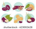 vector vintage set nuts icons.... | Shutterstock .eps vector #623002628
