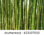 Close Up Green Bamboo Background