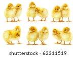 cute little baby chicken | Shutterstock . vector #62311519