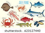 set of fish and marine fauna... | Shutterstock .eps vector #623127440