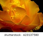 roses with drops of rain. soft... | Shutterstock . vector #623137580
