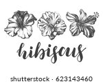 ink hand drawn set of tropical... | Shutterstock .eps vector #623143460