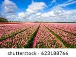 pink tulips field landscape sky ... | Shutterstock . vector #623188766