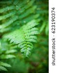Small photo of Fern (Pteridophyte) green leaves in the spring forest. Close-up.