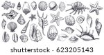 seashells vector set. hand... | Shutterstock .eps vector #623205143