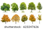 Tree set collection isolated on white background. Oak, maple, linden, birch. Green and yellow leaves