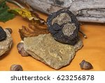 Small photo of Burgundy truffles for sale, Truffle market, Switzerland