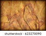 autumn dry maple leaves... | Shutterstock . vector #623270090