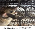 Rat In Cage Or Mousetrap....