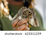 Small photo of Butterfly farm employee demonstrates how the defense mechanism of looking like an owl adopted by the owl butterfly.
