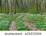 Road In A Spring Forest With...