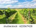 vineyard landscape   summer in... | Shutterstock . vector #623367428