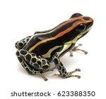 Poison Dart Frog  Ranitomeya...