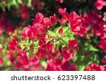 bright pink red flowers of the... | Shutterstock . vector #623397488