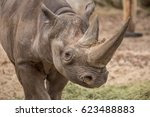 cute baby rhino at zoo in berlin | Shutterstock . vector #623488883