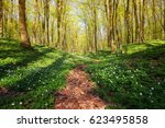 Picturesque Pathway Among Whit...