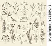collection of floral elements  ...   Shutterstock .eps vector #623509148