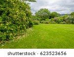 yellow roses blooming bush in... | Shutterstock . vector #623523656