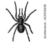 Spider Or Arachnid Species ...