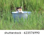 Stock photo adorable kitten outdoors in green tall grass on a sunny day 623576990
