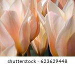 macro photography of spring... | Shutterstock . vector #623629448