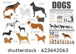 Dog Info Graphic Template....