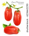 italian plum tomatoes san... | Shutterstock .eps vector #623662250