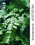 Small photo of Macro of adiantum philippense or maidenhair fern growing in flower garden, vertical
