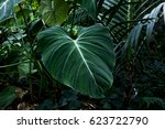 Small photo of Leaf of Alocasia on the dark background, exotic and tropical plants. horizontal