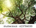 tree from bottom view. can be... | Shutterstock . vector #623786030