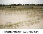 sand dunes in letea forest   in ... | Shutterstock . vector #623789534