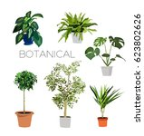 potted plants collection.... | Shutterstock .eps vector #623802626