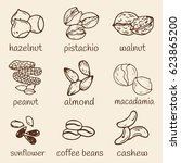 set of hand drawn nuts isolated.... | Shutterstock .eps vector #623865200