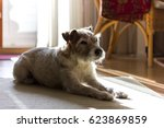 Family Dog In The Living Room