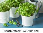 fresh basil thyme herb in a pot | Shutterstock . vector #623904428
