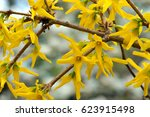 A Macro Shot Of The Yellow...