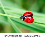 macro photo of ladybug in the... | Shutterstock . vector #623923958