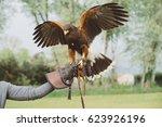 Small photo of Harris's hawk