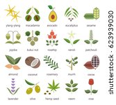 Set Of Herbs And Plants Color...
