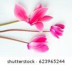 beautiful cyclamen flower... | Shutterstock . vector #623965244