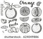 oranges  sketch.vector hand... | Shutterstock .eps vector #624049886
