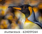 Portrait Of King Penguin With...