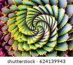 spiral aloe plant lesotho | Shutterstock . vector #624139943