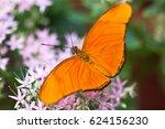 Banded Orange Heliconian ...