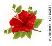Red Hibiscus Stem Tropical...