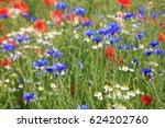 wildflower meadow with...   Shutterstock . vector #624202760