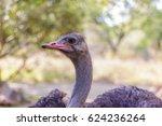 Ostrich. One. Side Profile....