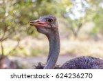 Ostrich. One. Side Open Mouth...